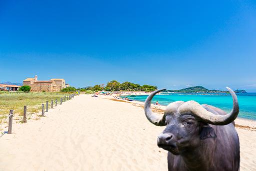 Bufala a Pula